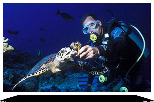 Dive Bora Bora