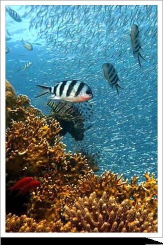 Tahiti Dive
