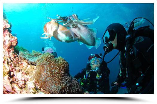 Honeymoon Special – Initiation Dive for Two
